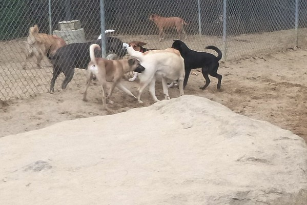 All Dogs Gym 04-24-2015