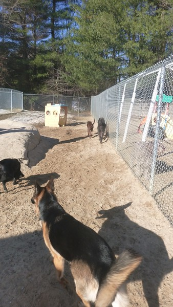All Dogs Gym 4-1-2015