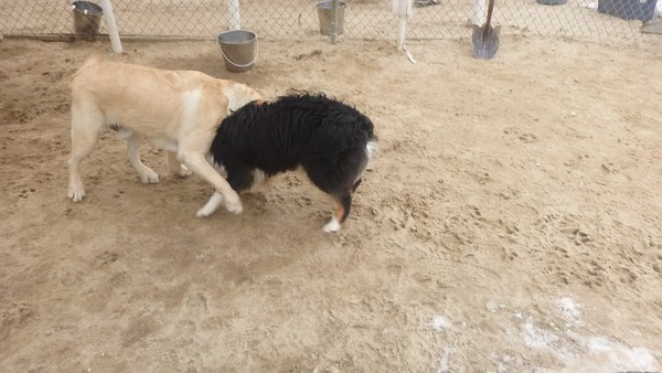 All Dogs Gym 4-2-2015