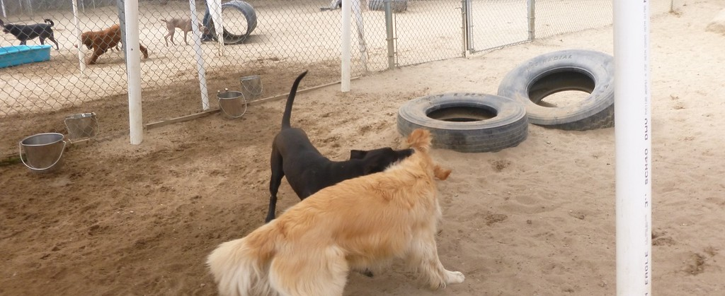 All Dogs Gym 5-1-2015