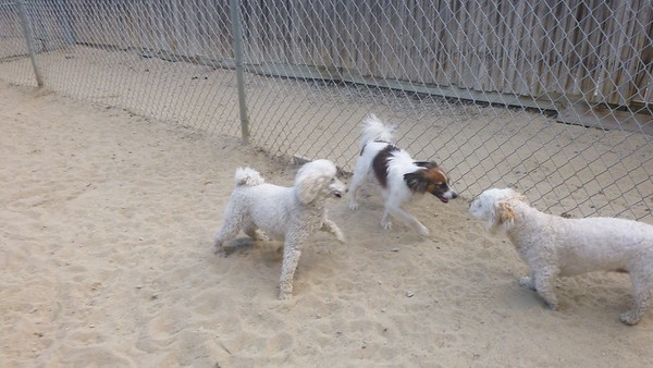All Dogs Gym 5-5-2015